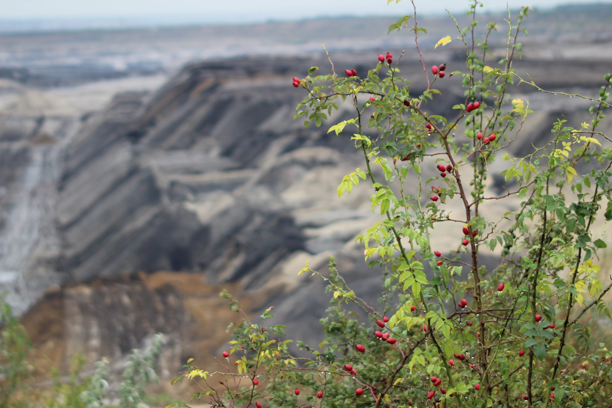 Osmium und die Organisation sind nachhaltig. Stakeholder und die Natur werden verantwortungsbewusst behandelt.